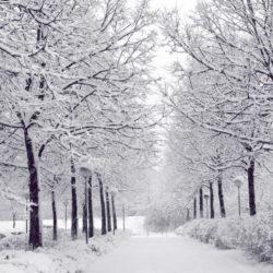 korea-winter-road-nami-island